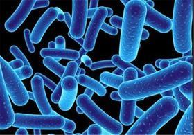 درک شخصیت باکتریها